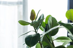 10 Benefits Of Houseplants
