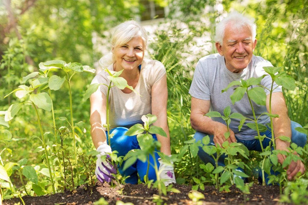 National Garden Month: 3 Tips A Clean Garden