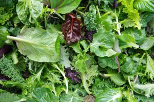 MedicareValue - Salad Greens